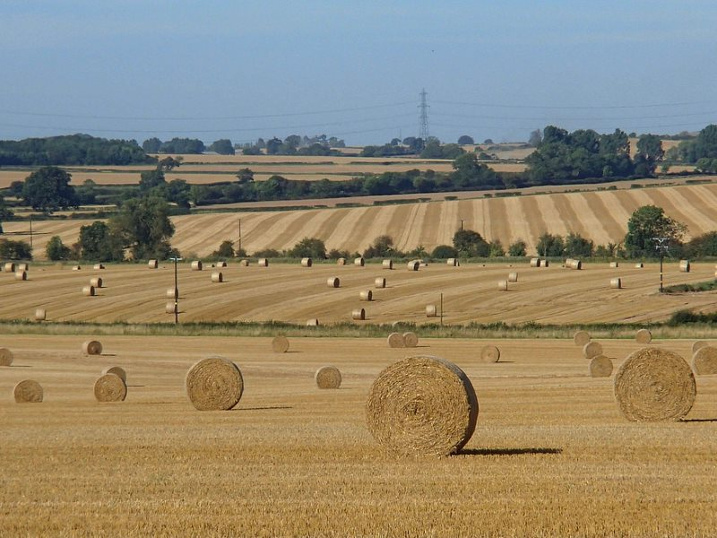 Intensive arable farming near Eakring, Nottinghamshire, England, carried out with massive taxpayer-funded subsidies to wealthy landowners. Photo: Andrew Hill via Flickr (CC BY-ND).