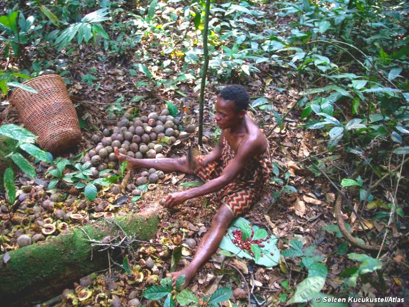 The Baka have lived sustainably in their rainforest home for generations. Photo: Selcen Kucukustel / Atlas / Survival International.