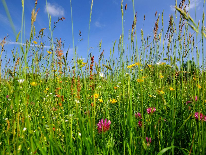 The bottom line: post-Brexit, will our countryside be richer, or poorer, in wild-flower meadows like this one near Silsden in West Yorkshire, England? Photo: Steven Feather via Flickr (CC BY-NC-SA).