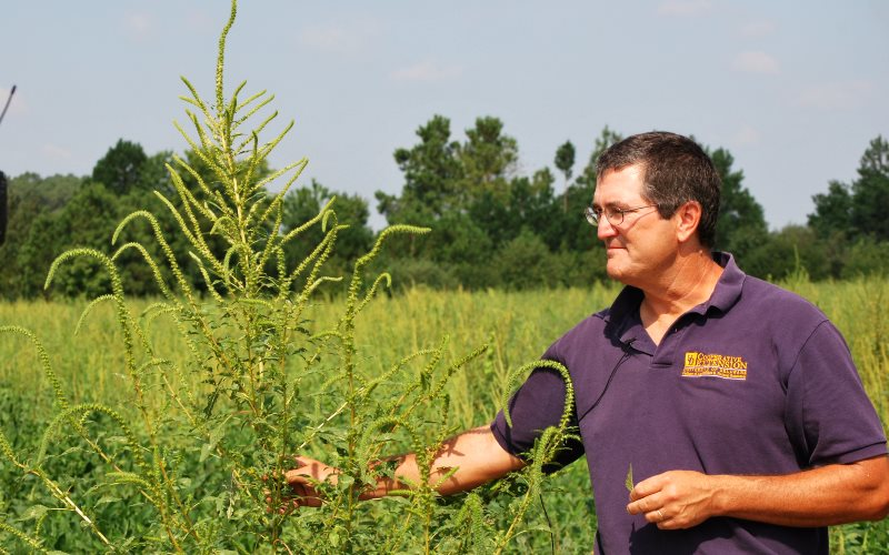 Mark VanGessel identifies Palmer Amaranth - now a superweed resistant to Roundup herbicides - in a field of soybeans. But how long before it also develops resistance to dicamba as well? Photo: University of Delaware Carvel REC via Flickr (CC BY).