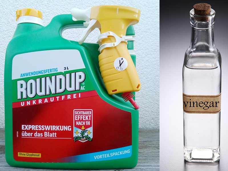 Spot the difference: Monsanto's new 'Glyphosate-free' Roundup product, now on sale in Germany, and a bottle of vinegar. Photo: Dr Helmut Burtscher / GMWatch.