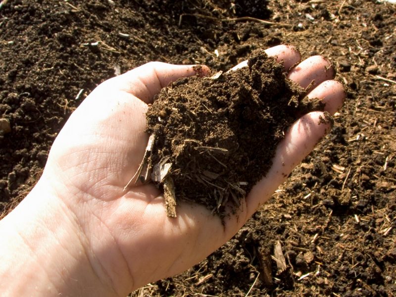 Healthy compost in the palm of a hand