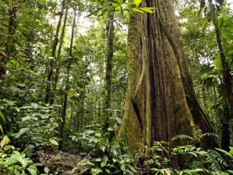 Ecuadorian Rainforest
