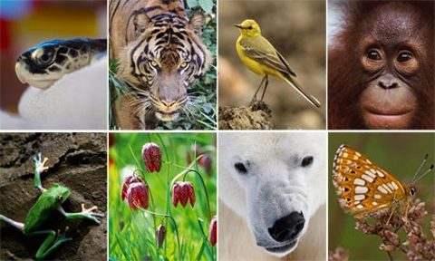 The biodiversity of Earth, from tulip to polar bear