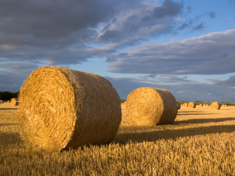 Are straw bales the future of sustainable building?