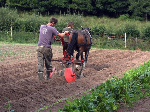 Ed Hamer and horse, hard at work. Photo: Chagfood.