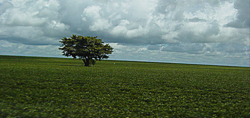 Soy on former forest, Mato Grosso, Brazil. Photo: Jeff Belmonte via Flickr.com.