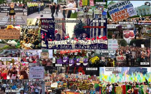 Montage of March Against Monsanto events yesterday by WTFRLY.COM.