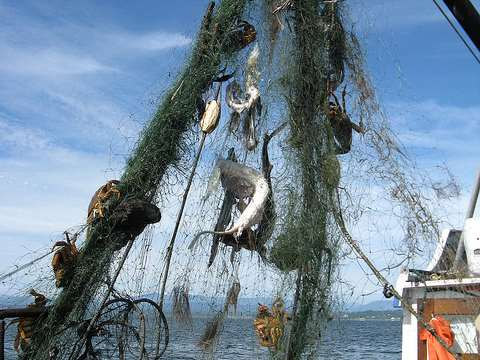 From derelict fishing gear to carpet. Photo: USFWS Puget Sound Coastal Program / Joan Drinkwin via Flickr.