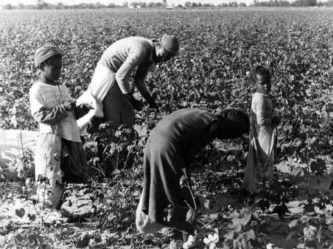 Blacks and Hispanics in the US are more likely to get reproductive cancers - could this be the result of Atrazine poisoning? Photo: A Black family picking cotton, 1937. By Louise Boyle via Kheel Center / Flickr.