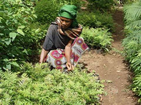 A farmer in Lushoto, Tanzania prepares seedlings for transplanting. Photo: P. Kimeli /  CIFOR.