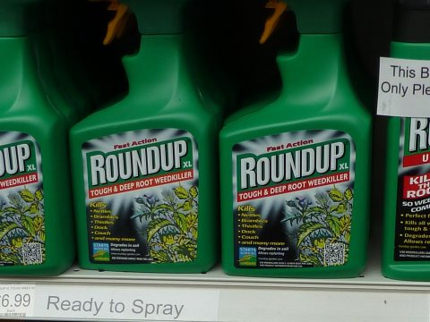 It's the RoundUp, stupid! Photo: London Permaculture via Flickr.