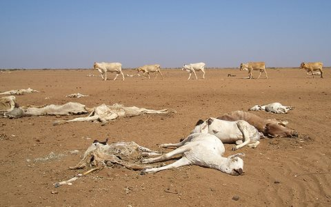 Drought leaves dead and dying animals in northern Kenya, 2006. Photo: Brendan Cox / Oxfam via Flickr.