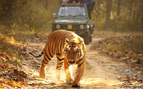 4WDs and tourists in, tribal people out - Kanha Tiger Reserve, India, where the events of Kipling's  'Jungle Book' take place. Photo: © Survival.