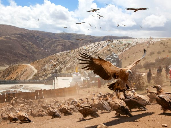 Vultures pay their respects at a sky burial in Sichuan province, China. Photo: Lycopodium L (CC BY-NC-SA).