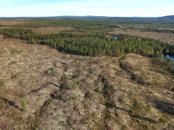 A clear-cut in Norrbotten Country, northern Sweden © Frédéric Forsmark.