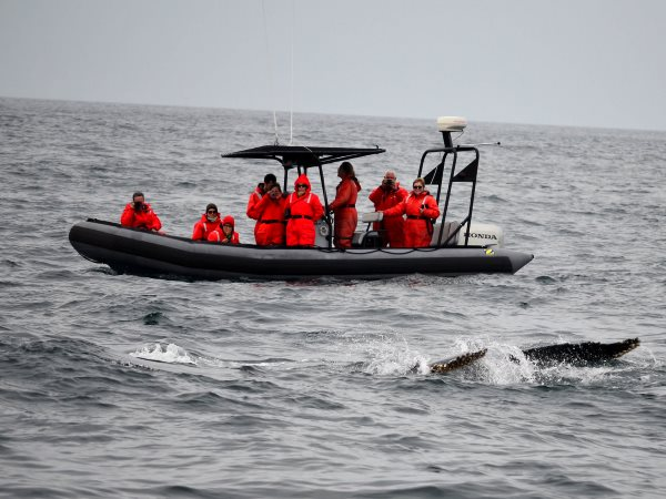 Whale watching off Digby's Neck, Nova Scotia, where Bilcon wants to site a massive basalt quarry. Now Canada must pay Bilcon as much as $300 million following a NAFTA judgment that the company's right to profit comes before cetacean survival. Photo: Reigh