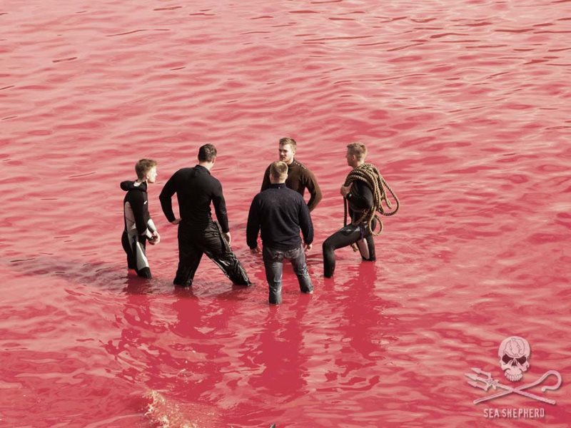 Danish Faroese whale hunters in a sea of red. Photo: Eliza Muirhead / Sea Shepherd.