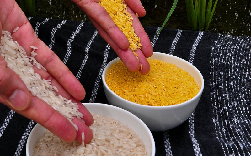 Ordinary white rice, and Golden rice. Photo: International Rice Research Institute (IRRI) via Wikimedia (CC BY).