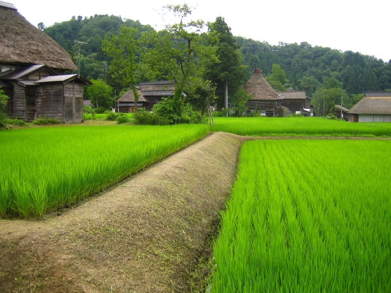 A rice field and some traditional farm houses in a small village in the South of Niigata, Japan. Photo: Norman Tannert via Flickr (CC BY-NC-ND).