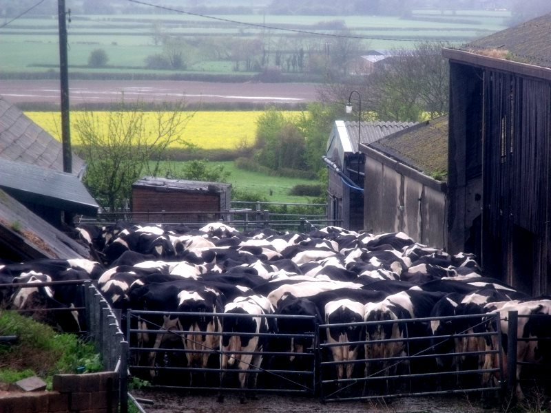 It's not just the cows that are being milked. A small dairy farm in Adber, Dorset. Photo: Elliott Brown via Flickr (CC BY-NC).
