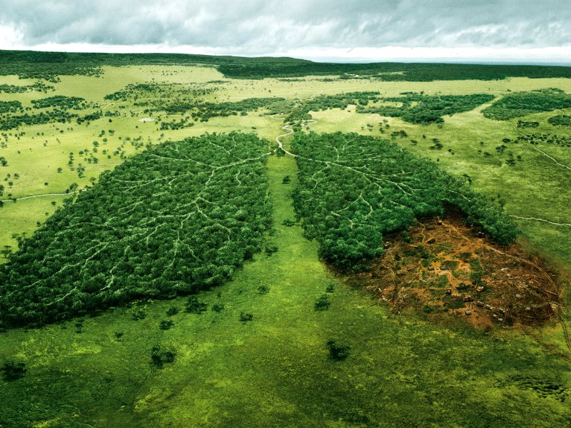 Going, going ... Photo: ad for WWF by TBWA\PARIS, France via brett jordan on Flickr (CC BY).