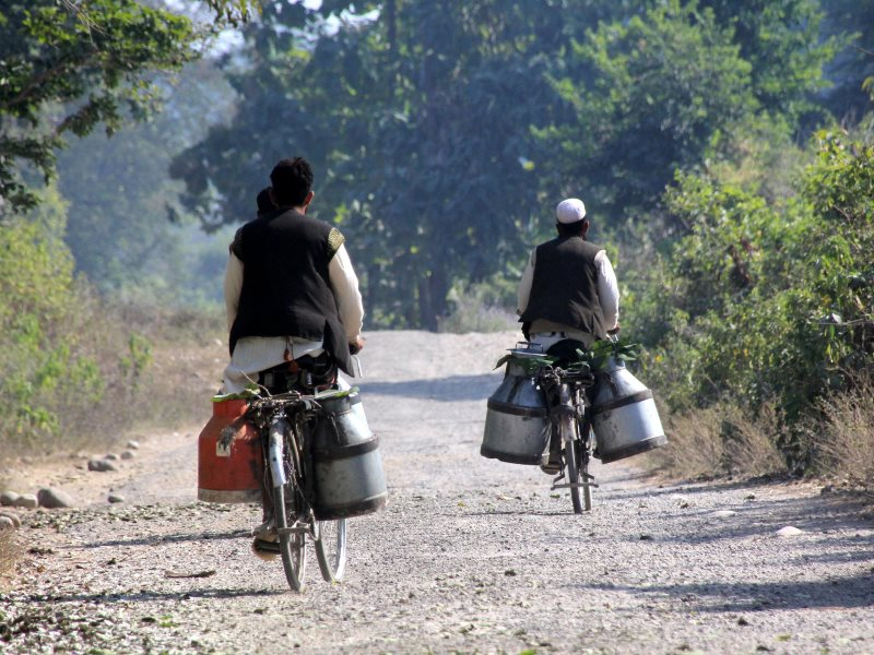 Farmers carrying milk to market on their bicycles under the hot sun in Ulttarakhand, India. Photo: Paul Hamilton via Flickr (CC BY-SA).