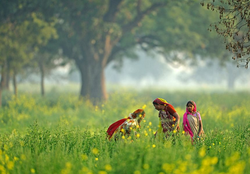 Women in the Mustard Fields In Uaipur Mishrikh, Uttar Pradesh, India. Photo: Nitin Bhardwaj via Flickr (CC BY-NC-SA).