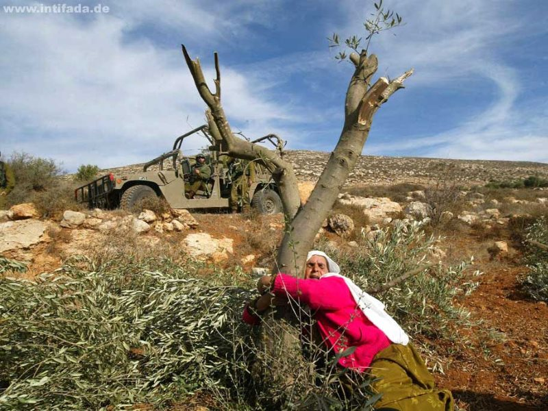 A Palestinan woman protecting an olive tree from destruction. Photo: intifada.de via Frank M. Rafik on Flickr (CC BY-NC-SA).