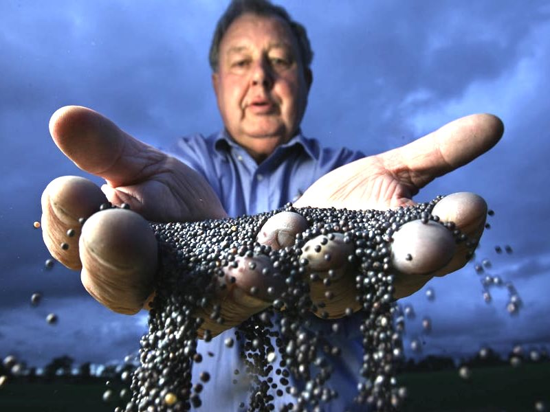 Australian farmer Geoffrey Carracher, who is against GM farming, with some canola seed that has been cross contaminated with GM seed from a nearby farm. Photo: Craig Sillitoe via Flickr (CC BY-NC-SA).