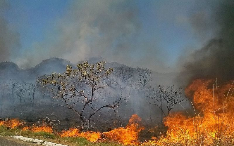 Devastating fire last year in the cerrado savanna region, one of Brazil's most threatened biomes. Photo: José Cruz/ABr via Wikimedia (CC-BY).