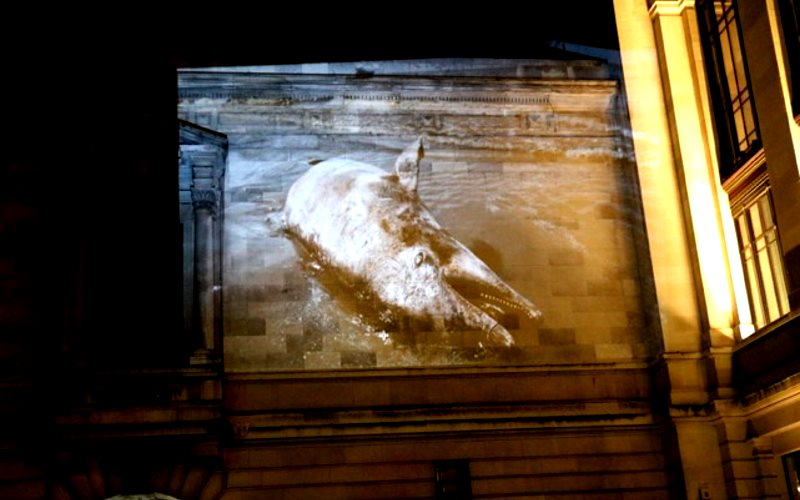 Oil-coated dolphin washed up on the Gulf coast following the Deepwater Horizon disaster, projected onto the walls of the Science Museum by 'BP or not BP'. Photo: BP or not BP.