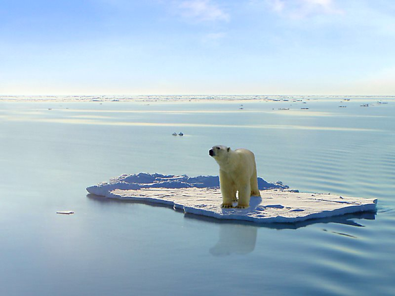 Polar bear adrift in the Arctic Ocean. Photo: Gerard Van der Leun via Flickr (CC BY-NC-ND).