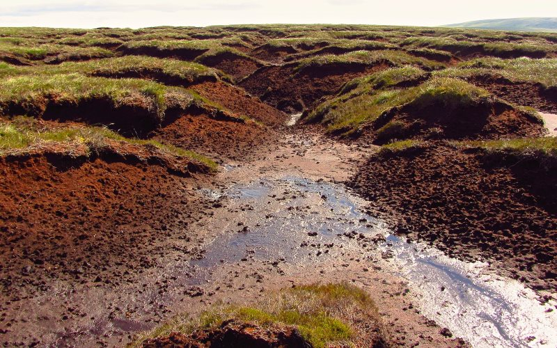 In 2012 Natural England pulled its legal inquiry into the burning of blanket bog in the Pennines - one of several factors damaging the rare and vulnerable habitat. Photo: Peer Lawther via Flickr (CC BY).
