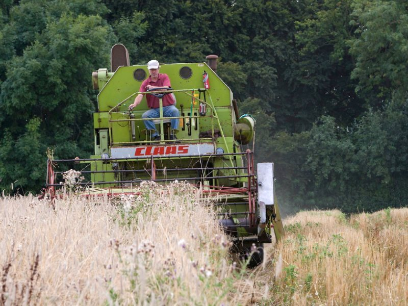 John Letts harvesting his biodiverse crop of heritage wheat on an organic farm in Buckinghamshire. Photo: Adrian Arbib for Resurgence & Ecologist Magazine.