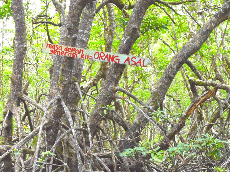Local communities in Pitas are monitoring the area in order to prevent the project from expanding into the remaining 1,000 acres of mangrove forest. The sign reads: Future for indigenous peoples. Photo: Camilla Capasso / FPP.