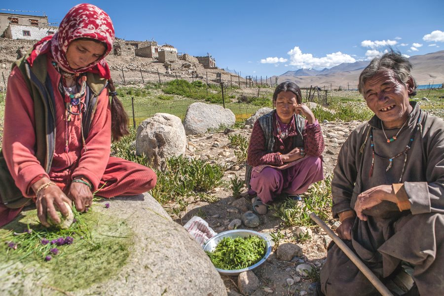 Woman preparing herbs for winter at Tso Moriri, Ladakh, India. Photo: sandeepachetan.com travel photography via Flickr (CC BY-NC-ND).