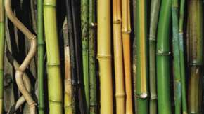 House-of-bamboo_MAIN.jpg