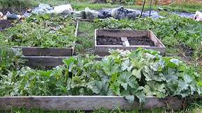 allotment big_1.jpg