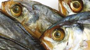 Fish_DecJan_09_MAIN.jpg
