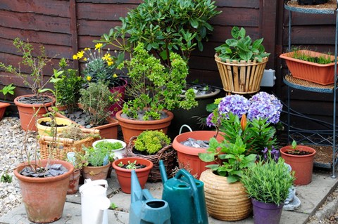Container gardening 35 of the best blogs The Ecologist