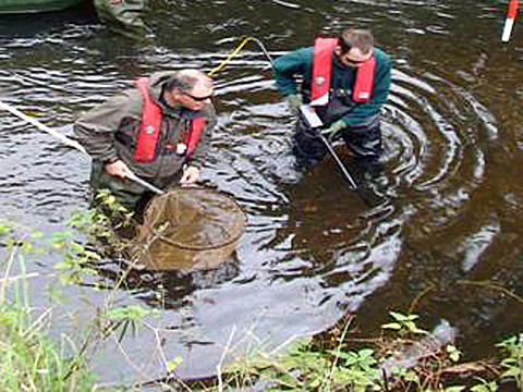 Chemical spillage wipes out fish in river trent