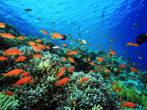essays on coral reefs