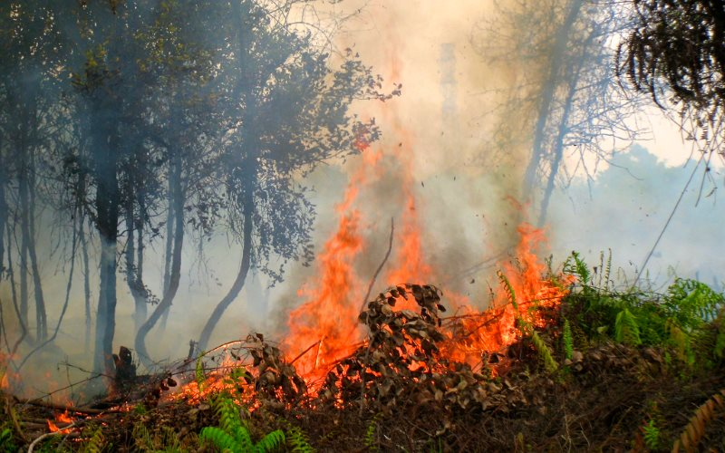 essays on forest fires Forest fires - a burning issue essay by 12whuzurdaddy march 31, 2018, from more science essays.
