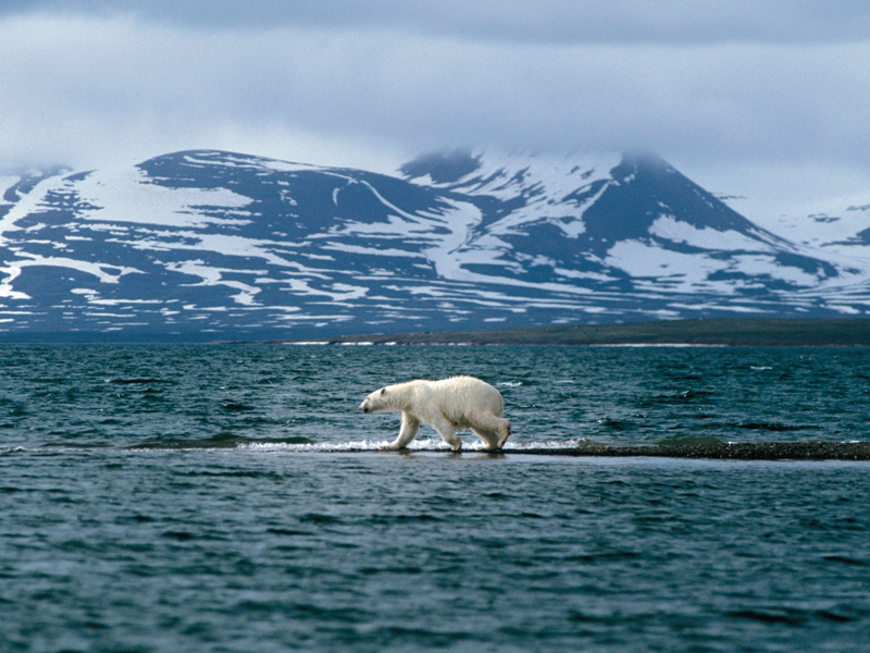 Animals Global Warming