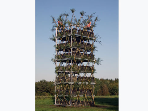 The scaffolding will be removed from the tree tower after 8-10 years