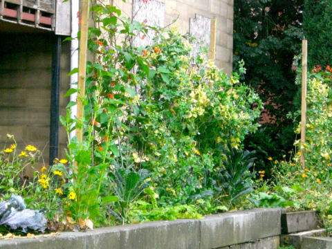 The 'Shipman Clinic', Todmorden, now a free food resource. Photo: Incredible Edible.