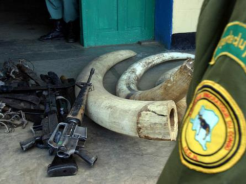 Ivory and guns seized by park rangers, Virunga National Park. Photo: Radio Okapi via Flickr.