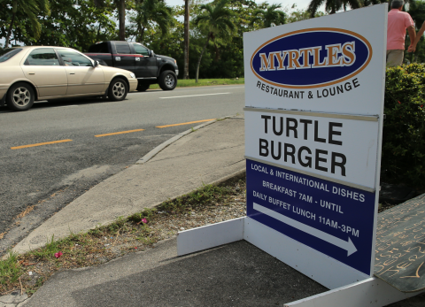 Fancy a turtle burger? Photo: © Catherine Mason.