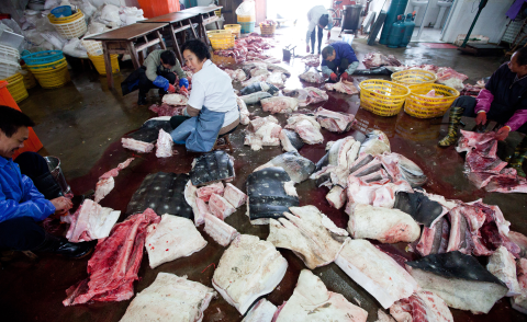 Whale shark factory floor. Photo: WildLife Risk.